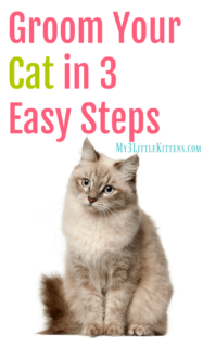 Groom Your Cat in 3 Easy Steps – Eazee Click & Brush #Giveaway