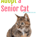 5 Reasons to Adopt a Senior Cat