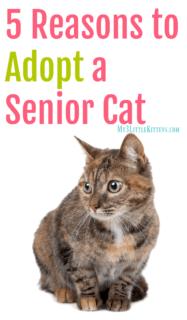 5 Reasons to Adopt a Senior Cat