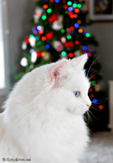 5 Holiday Hazards for Your Cat