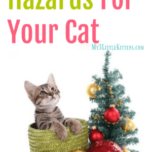 5 Holiday Hazards for your Cat. Keep kitty safe this Christmas!