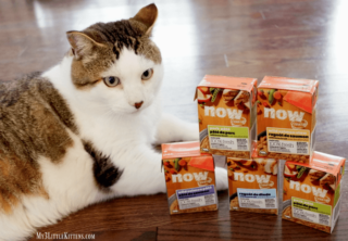 NOW FRESH Natural Cat Food #Giveaway