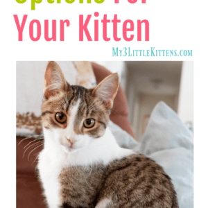 Cat Tree Options For Your Kitten