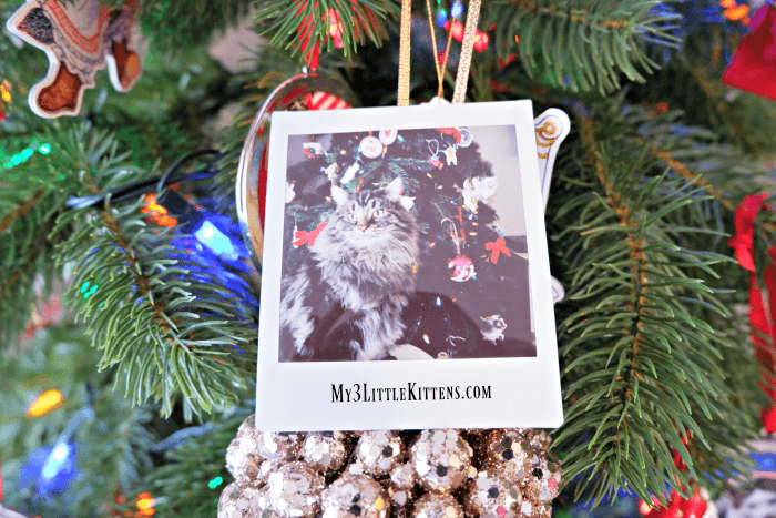 Holiday Photos with FujiFilm