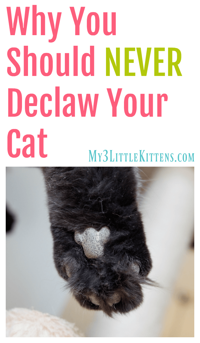 Why You Should Never Declaw Your Cat. Because Kitty Deserves to be Healthy!
