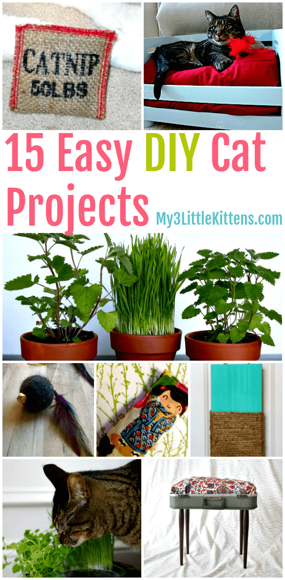 3 Easy Diy Storage Ideas For Small Kitchen: 15 Easy DIY Cat Projects