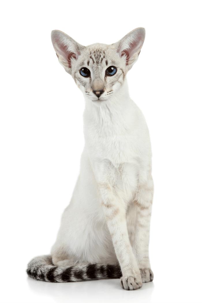 Understanding Different Cat Breeds