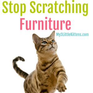 how to stop cat from scratching new couch