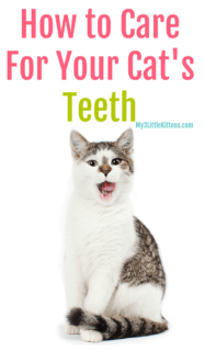 Ever Wonder How to Clean Your Cat's Teeth? Dental Health and Hygiene is Important for Your Kitty Too!