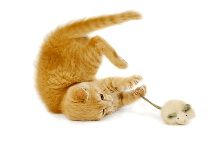 Ever Find Yourself Wondering Why Do Cats Eat Mice? Learn What Your Kitty Already Knows!