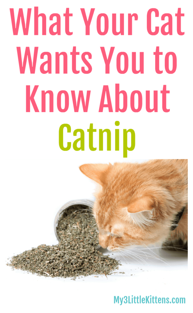 What Your Cat Wants You to Know About Catnip! From Benefits of the Plant to Uses in Toys!